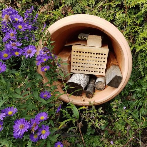standort Nisthilfe auswaelen Rostrote Mauerbiene (Osmia bicornis) in Blumentopf