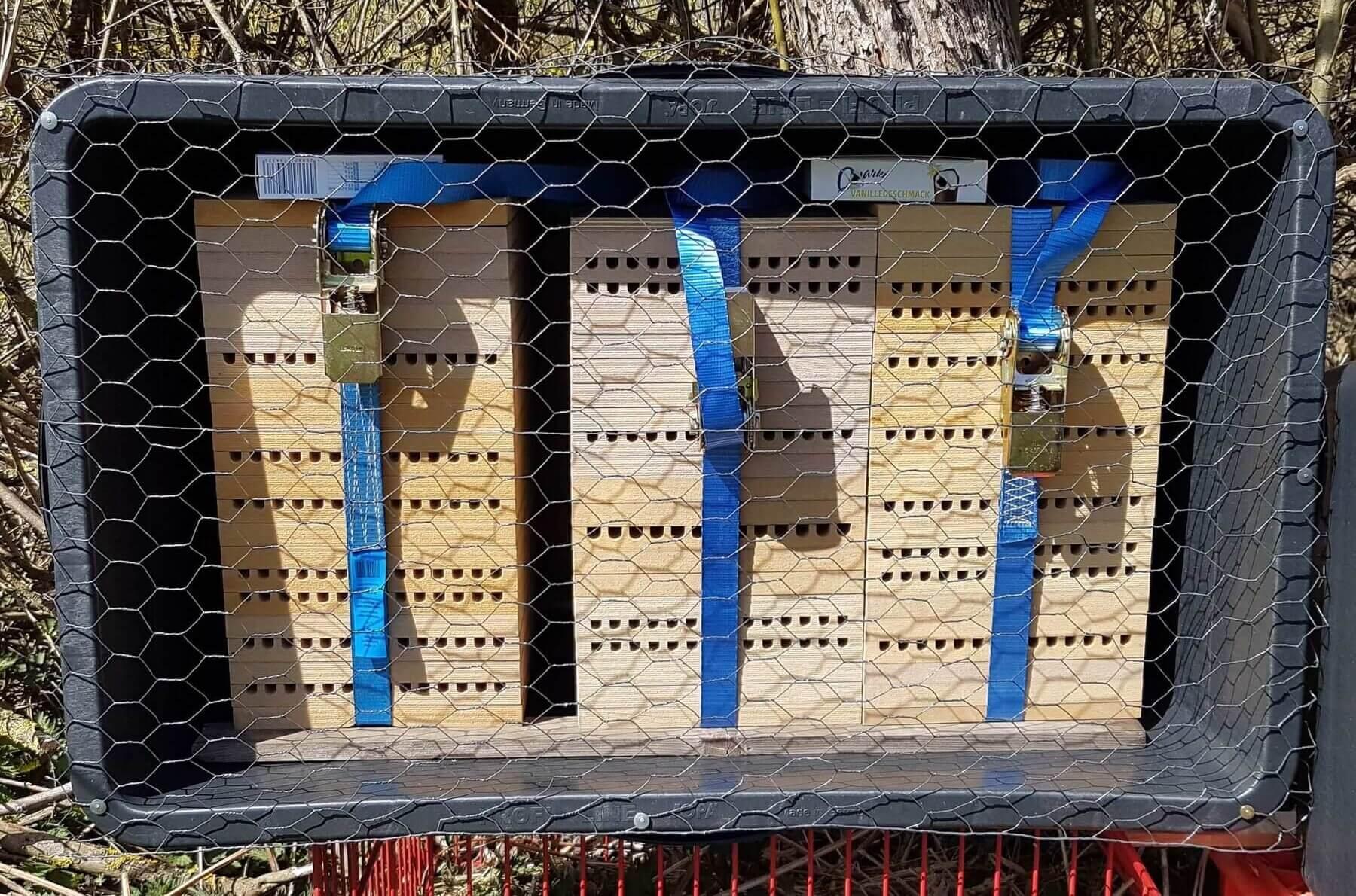Mauerbienen Niststand mit Vogelschutzgitter