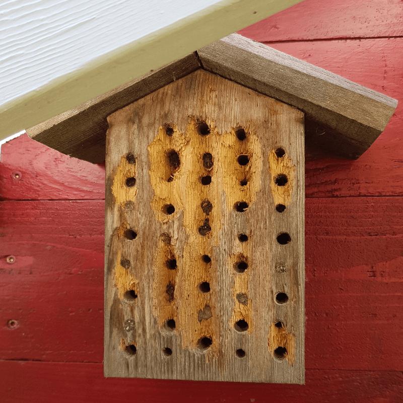 Wildbienennisthilfe mit Vogelschaden